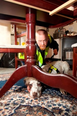Dog handler Alan Johnson and Archie in action.